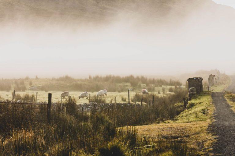 Sligo : que faire, que voir dans les Ox Mountains ?